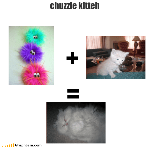 animals Cats chuzzle equations Fluffy kitten - 2066484480