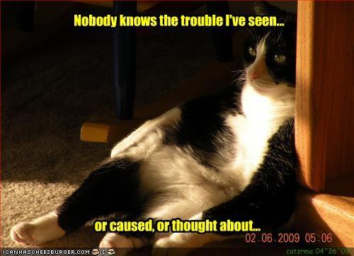 bad cat trouble - 2066561792