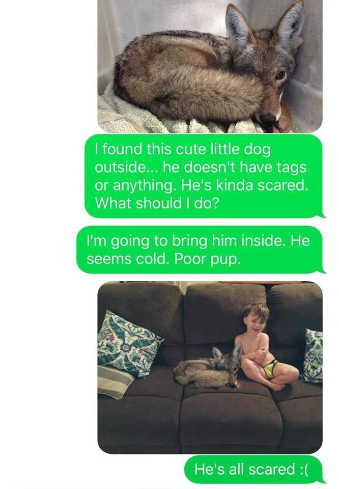 coyote texts wife husband prank funny