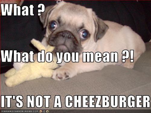 Cheezburger Image 2070202624