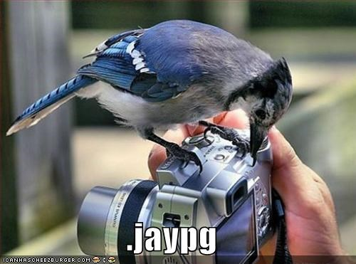 camera,lolbirds