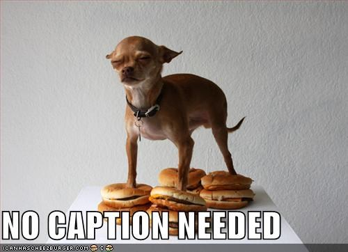 Cheezburger Image 2071035136