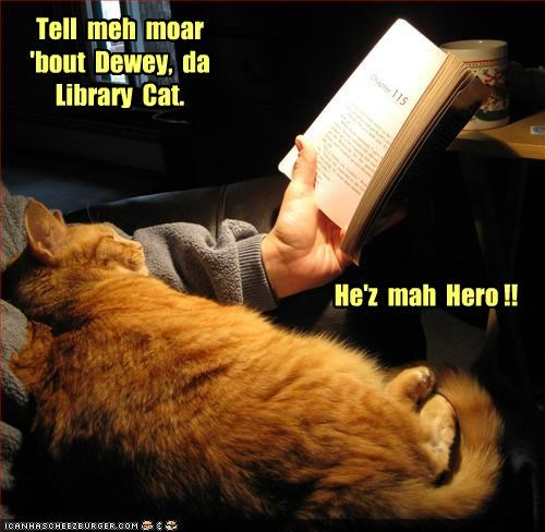 Tell meh moar 'bout Dewey, da Library Cat. He'z mah Hero !!
