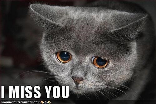 I Miss You Cheezburger Funny Memes Funny Pictures