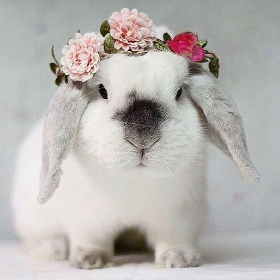 pets instagram cute