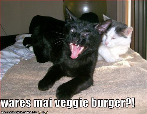 Cheezburger Image 2078703872
