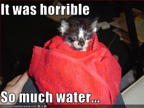 bath cute kitten scared - 2078893824