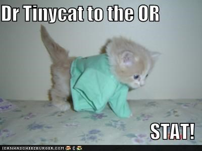 doctor,ER,Hall of Fame,kitteh,kitten,lolcats