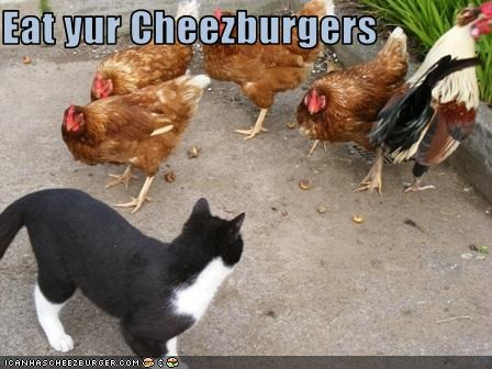 Cheezburger Image 2080180992