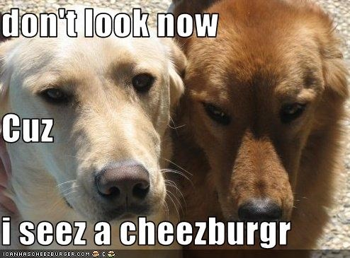 Cheezburger Image 2082757888