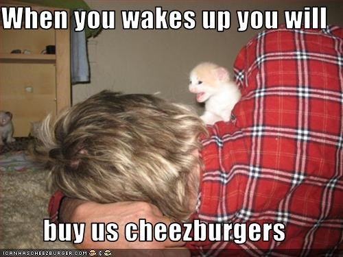 Cheezburger Image 2083372800