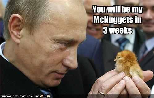 Cheezburger Image 2085061376
