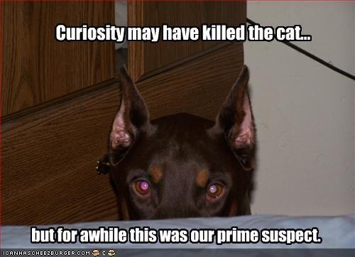 curiousity,doberman pinscher,lolcats,suspicious