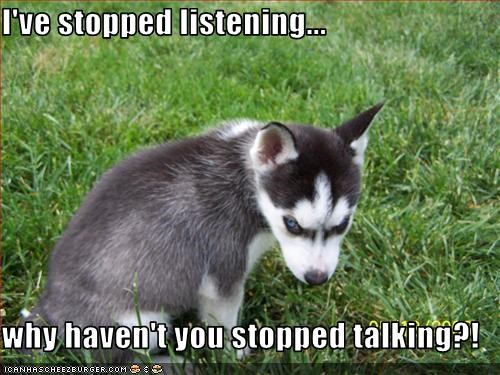 angry intimidating listening malamute stop talking