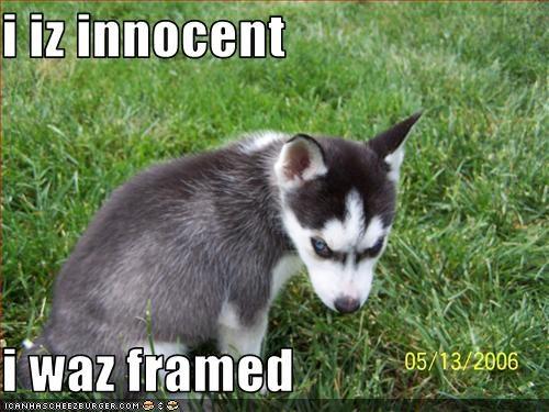 Cheezburger Image 2087774976