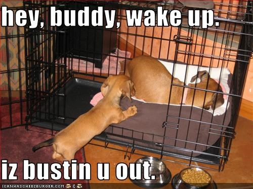 asleep,break out,cage,crate,dachshund,jail