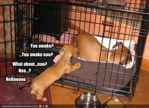 You awake? ...You awake nao? What about...nao? Nao...? Hellooooo