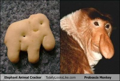 animal crackers,animals,cookies,elephant,food,monkey,Proboscis Monkey