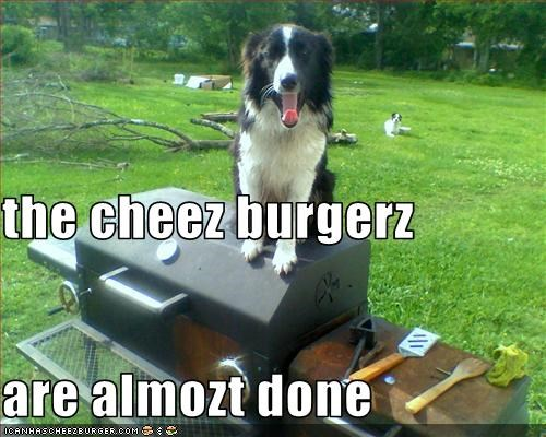 Cheezburger Image 2092065536