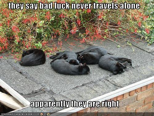 bad luck basement cat - 2092731136
