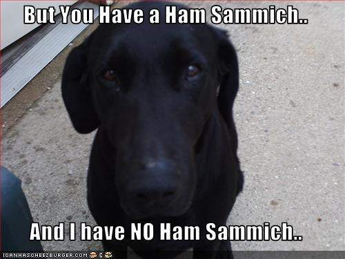 ham,hungry,jealous,labrador,Sad,sandwich