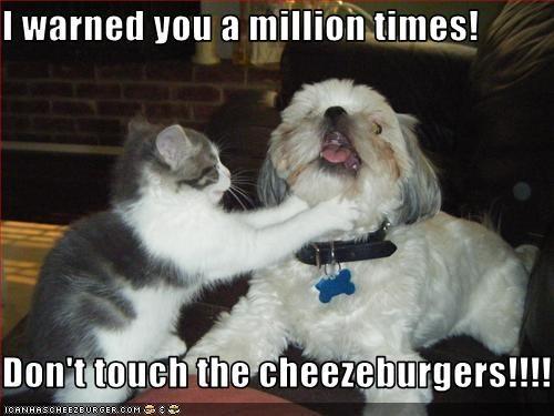 Cheezburger Image 2094508800
