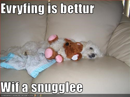 couch,cuddles,maltese,snuggle,stuffed animal,stuffed toy,teddy bear,toys