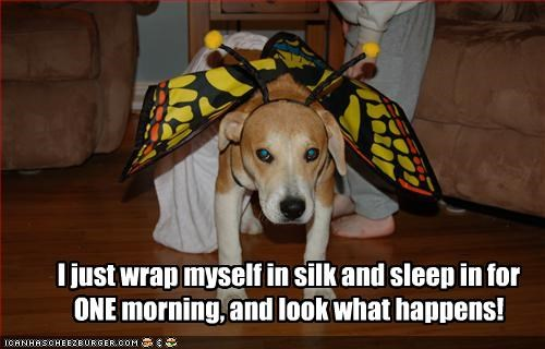 butterfly costume sleep wake up whatbreed