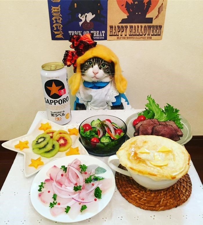 outfit instagram food Cats funny - 2095621