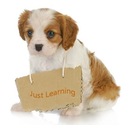 dogs puppies training digital application - 2097413