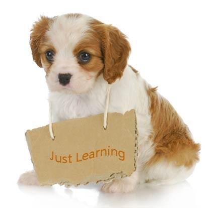 puppies training digital application - 2097413