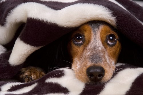8 dogs with weird phobias of unusual things