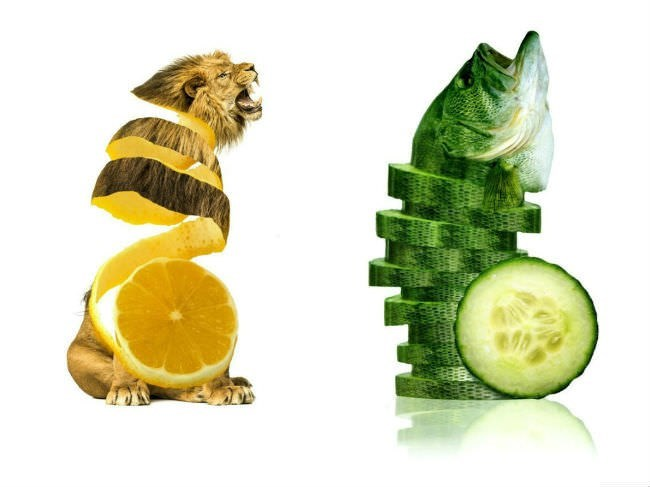 art images of how animals would look like if they were fruits and vegetables
