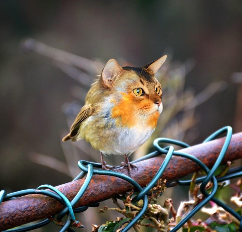 photoshop images of hybrid animals