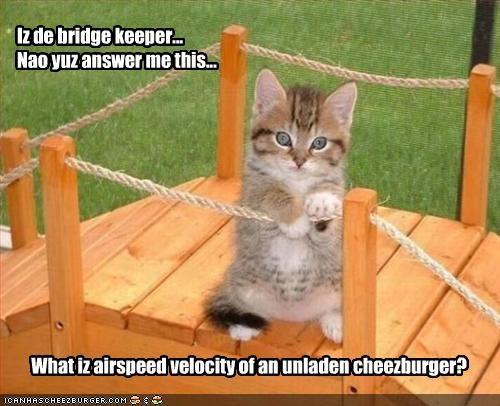 Cheezburger Image 2098561280