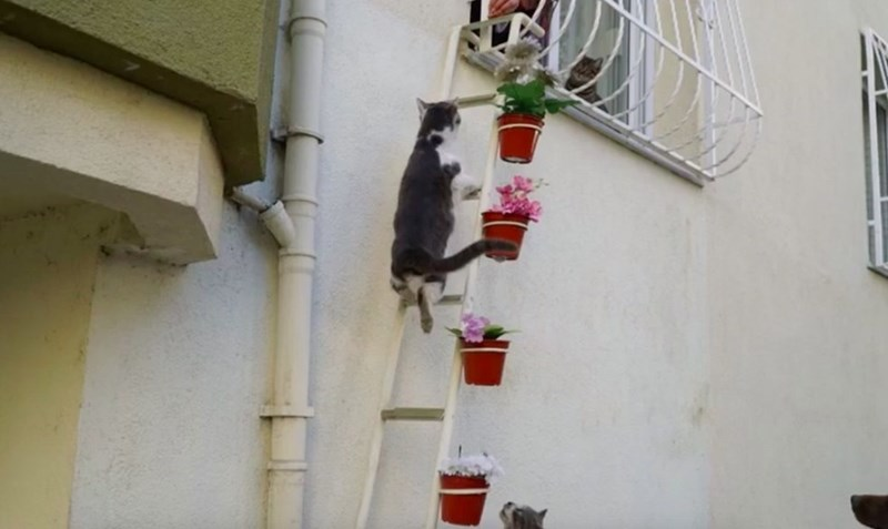 women in turkey built a ladder to her house in order to help the freezing stray cats