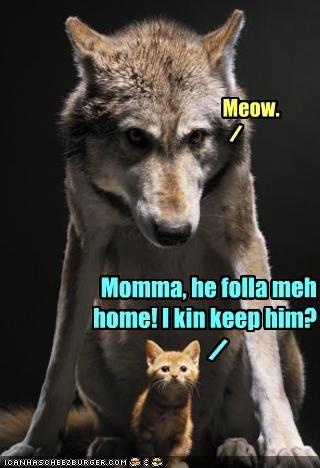 Meow. / Momma, he folla meh home! I kin keep him? /