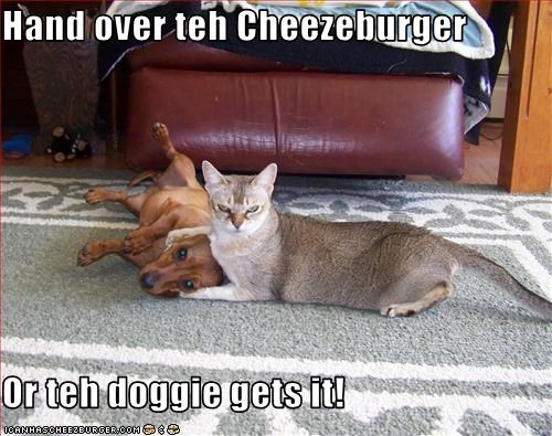 Cheezburger Image 2107789056