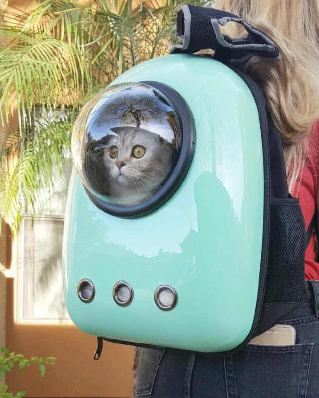 Picture of a confused looking cat inside a backpack with an a bubble window so the cat can look through - Cover picture for sometimes we all get confused