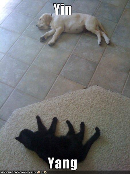 black,labrador,lolcats,peace,white,yin yang