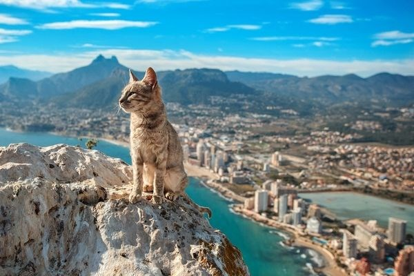 Pictures of cats living all around the world