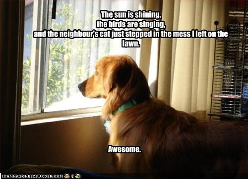 awesome,birds,golden retriever,happy,lolcats,poop,singing,sunshine