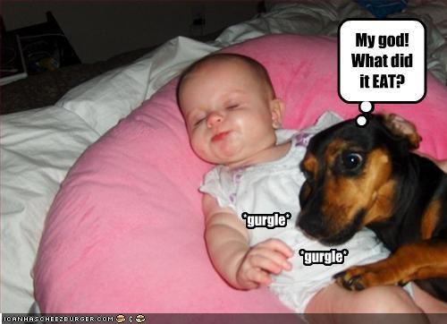 baby dachshund diaper eat human smell stinky tummy - 2111641856