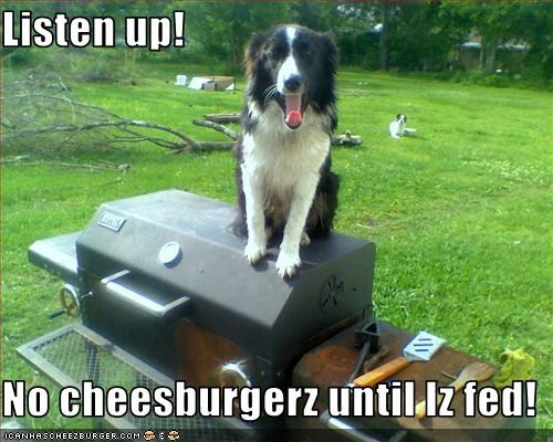 Cheezburger Image 2113473792