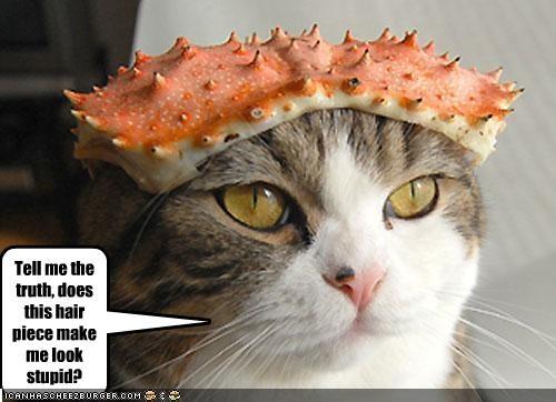 Cheezburger Image 2113526528