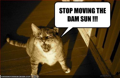 angry,nap,sunshine