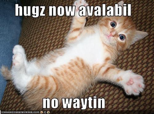cute hug kitten - 2114469632