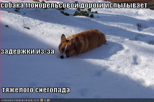Cheezburger Image 2114591488