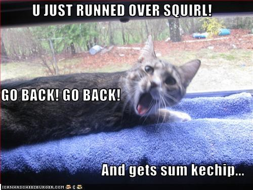 fud lolsquirrels murder nom nom nom want - 2115122944