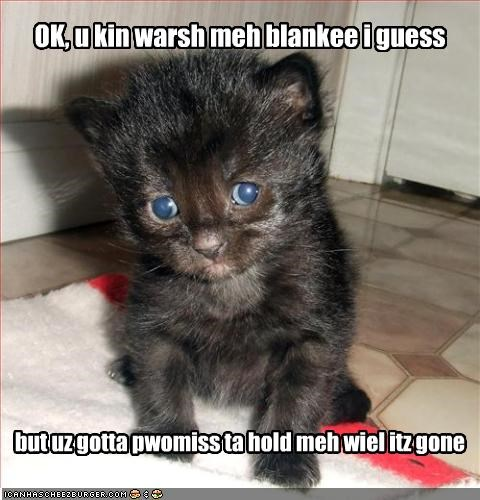 blanket cute kitten scared - 2116015360
